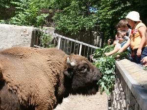 В зоопарке пройдет день самого польского зверя