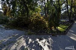 В одесском Городском саду от ветра упало три дерева (ФОТО)