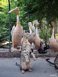 Пеликаны в одесском зоопарке жестко конкурируют с котами за рыбу (ФОТО)