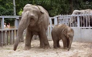Одесскому зоопарку - европейский уровень: мэрия планирует реконструкцию