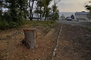 На Ланжероне продолжается уничтожение деревьев (ФОТО)