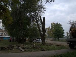 В зеленой зоне у ипподрома уничтожаются деревья (ФОТО)