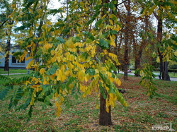 Золотая осень в Одессе (ФОТО)