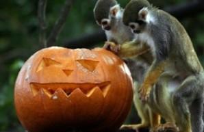 Зоохэллоуин для самых маленьких