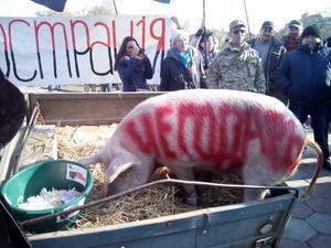 Люстрация экс-вице-губернаторов не состоялась: вместо них к обладминистрации привезли свинью (ФОТО)