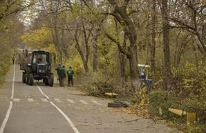 На Трассе Здоровья работает тяжелая техника: пилят деревья (ФОТОРЕПОРТАЖ)
