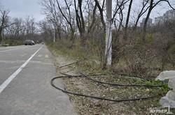 На Трассе Здоровья жгут кусты и паркуют автомобили (ФОТО)