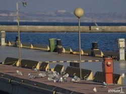 Водоплавающие птицы и суда: прогулка по Морвокзалу в первый зимний день (ФОТО)