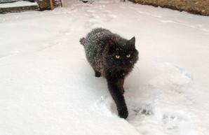 Вхурделячило: Одесса в снегу (ФОТОРЕПОРТАЖ)