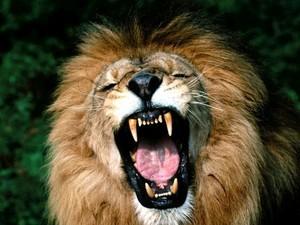 Пропавший лев из одесского цирка - фейк