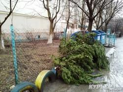 Лесоповал в одесском жилмассиве Таирова (ФОТО)