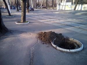На одесском Французском бульваре готовятся сажать деревья (ФОТО)