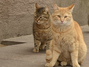 Одесские санитарные котики с Приморского бульвара (ФОТО)