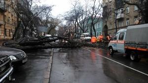 Итоги урагана в Одессе: рухнуло более 220 деревьев