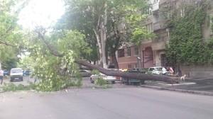 Цветущая акация рухнула и перекрыла улицу в центре Одессы (ФОТО)