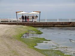 Элитный одесский пляж затянуло ядовитыми водорослями (ФОТО)