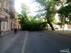 В центре Одессы рухнуло огромное дерево (ФОТО)