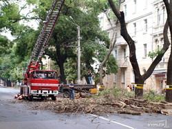 В центре Одессы перекрыта улица: пилят дерево (ФОТО)