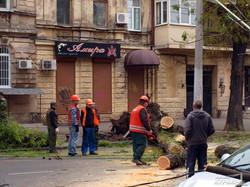 Рухнувшее в центре Одессы дерево перекрыло улицу и придавило автомобиль (ФОТО)