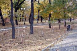 Уничтоженную вандалами аллею в память Небесной Сотни одесская мэрия обещает восстановить (ФОТО)