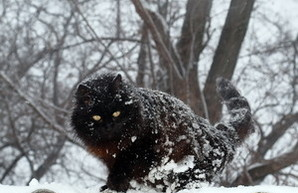 Одессу засыпает снегом: коллапса пока еще нет (ФОТО)