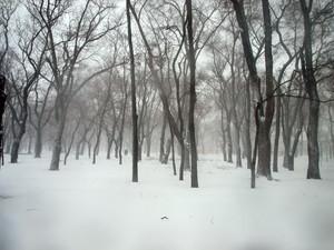 Снегопад обесточил 47 населенных пунктов Одесской области
