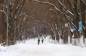 Одесскую Трассу Здоровья замело снегом (ФОТО)