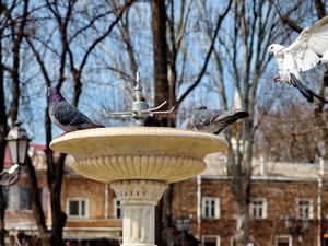 Одесская мэрия обещает включить фонтаны в день смеха