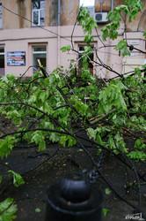 Непогода в Одессе: падают деревья и проседает земля (ФОТО)