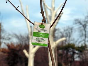 Одесская общественность предложила мэрии не согласовывать высадку деревьев (ФОТО)