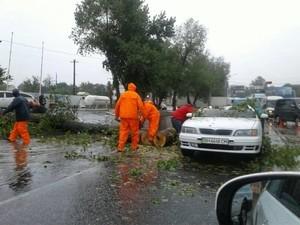 В Одессе дерево упало на автомобиль: есть потерпевший (ФОТО)