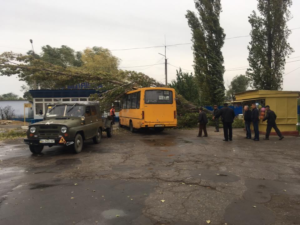 В Беляевке дерево рухнуло на пассажирский автобус