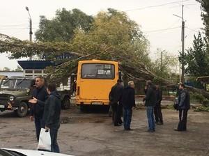 В Беляевке дерево рухнуло на автобус (ФОТО)