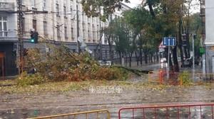 Поваленные деревья остановили почти все маршруты одесского электротранспорта