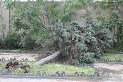 Пересипь после урагана