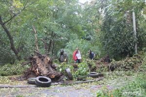 Из-за упавших деревьев в Одессе не работает два детских сада