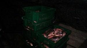 На Днестровском лимане опять поймали браконьеров (ФОТО)
