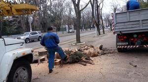 Одесские активисты проверили законность уничтожения деревьев на Французском бульваре (ФОТО)