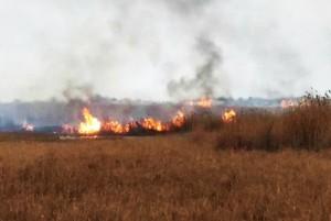 Браконьеры подожгли плавни в национальном парке, чтобы убивать спасающихся от огня животных (ФОТО)