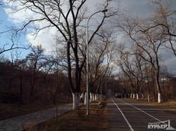Как в Одессе на Трассе Здоровья старые столбы освещения сносят (ФОТО)
