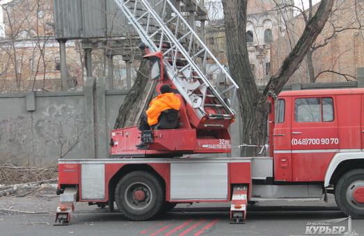 В центре Одессы опять затруднено движение транспорта: подрезают деревья