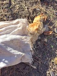 Как убивают кошек владельцы одесской канатной дороги (ФОТО 18+)