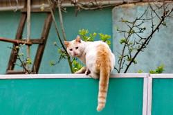 Экстремальные пятничные котики одесского Придунавья (ФОТО)