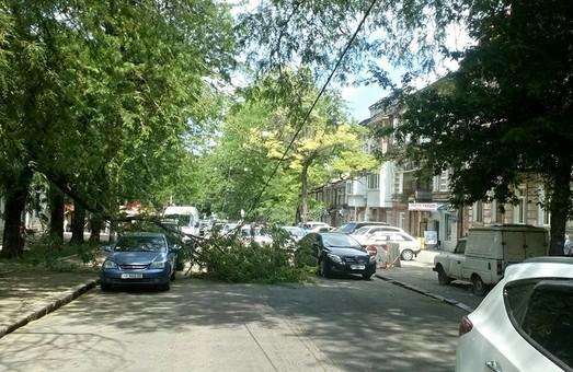 В центре Одессы на автомобили упала огромная ветка дерева (ФОТО)
