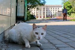 Одесские куликовцы показали свое настоящее лицо (ФОТО)