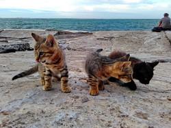 Пятница: котики на одесском Ланжероне (ФОТО)
