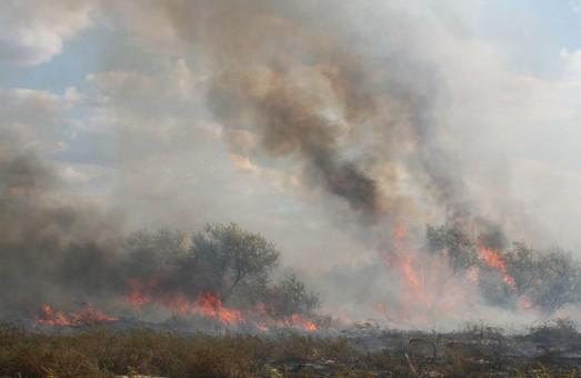 Вандалы подожгли национальный парк на юге Одесской области (ФОТО)