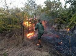 Иван Русев: пожар уничтожил транзитный дом журавлей в Одесской области