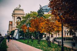 Осенняя Одесса в ноябре окрасилась в желтый цвет (ФОТО)