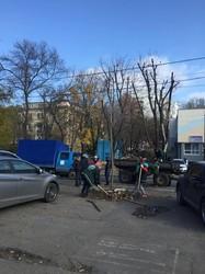 Французский бульвар в Одессе озеленяют новыми деревьями